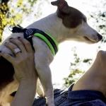 Harnais Souple et Réglable pour Petit Chien en Vert Fluo