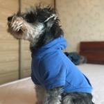 Felpa Azzurra per Cani Piccoli in Cotone