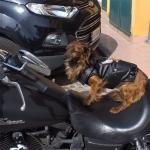 Giacca Biker per cani Nera