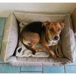Cuccia Impermeabile e Sfoderabile per Cani Medi e Grandi in Beige