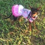 Abito Sunflower Rosa con Tutu per Cani Piccoli