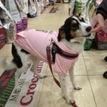 Felpa Rosa per Cani di Taglia Grande