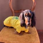 Maglietta Calcio del Brasile per cani Bassotti