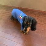Maglietta Nazionale Italiana per Bassotti