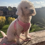 Summer Harness for Small Dogs with Leash in Pink