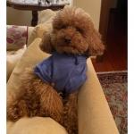 Sudadera de Algodón Azul Regio para Perro Pequeño