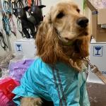 Impermeabile Celeste a 4 zampe per cani taglia grande