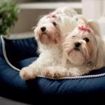 Cama Azul Desenfundable para Perros