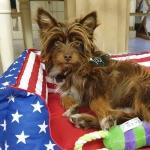 Cuccia Sfoderabile per Cane Piccolo in fantasia Bandiera USA