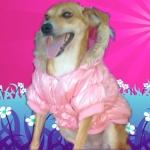 Piumino Imbottitissimo Rosa per cani