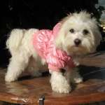 Dog Bomber Jackets in Pink