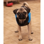 Blue Sleeveless Jacket for Dogs