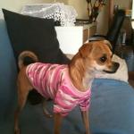 Camiseta Rosa Camuflaje para Perras
