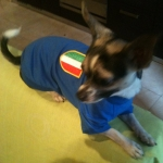 Italy T-Shirts for Dogs