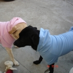 Felpa Celeste per Cani Taglia Grande