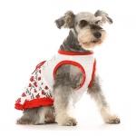 Vestitino per cani San Valentino
