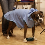 LightBlue Fleece Sweatshirt for large sized dogs