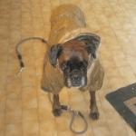 Abrigo Acolchado Verde Oliva para perros grandes