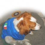 Italy T-Shirts for Large Dogs
