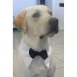 Bow Tie for Large Dogs