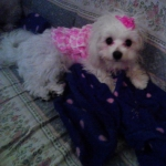 Summer Ruffle Dress for Dogs