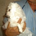 Vestido de novia Blanco para perros