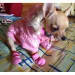 Chaqueta de Bombardero Rosa para perros