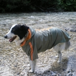 Green Raincoat for Big Sized Dogs