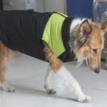 Giacca antivento Verde per cani di taglia grande