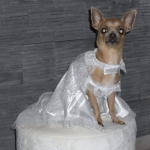 Dog Wedding Dress in White