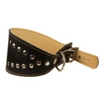 Collar for Greyhound in Black Leather with Studs