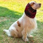 Orejeras Impermeable para Perros en Rojo